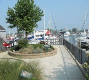 Trees, Rain Water And Chesapeake Bay Water Quality