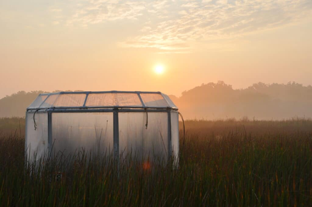 Wetland at sunrise, with a translucent, open-top experimental chamber in the foreground